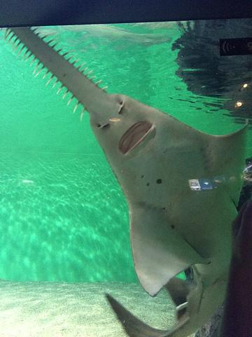 """""""见了很多长得很神奇的鱼,带个好点的相机去,用手机拍的,完全看不清楚。周一去,人非常少,简直太明智_上海海洋水族馆""""的评论图片"""