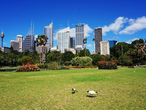 皇家植物园旅游景点图片