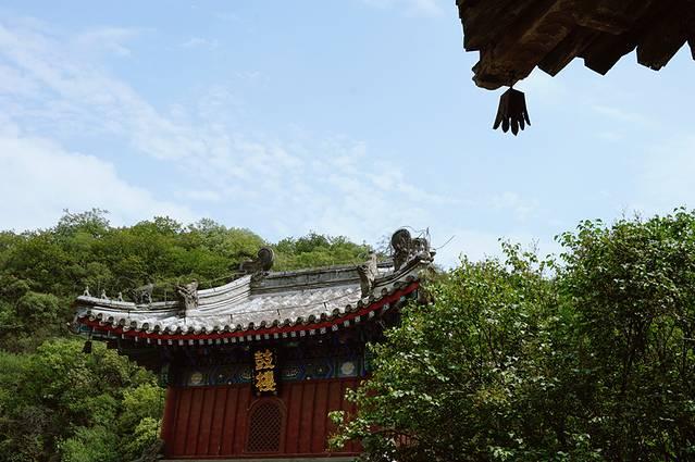 北京的古松名木,以西郊为冠.在戒台寺中,就有许多的松树,树型各