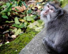 """暴走巴厘岛圣猴森林公园,难逃猴精""""魔掌"""""""
