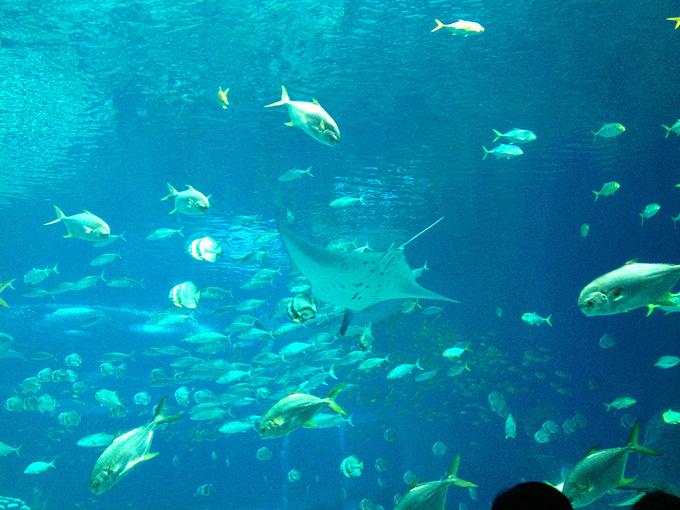 鲸鲨馆图片