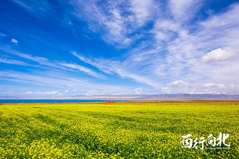 青海湖的图片
