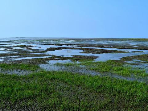 高美湿地旅游景点图片