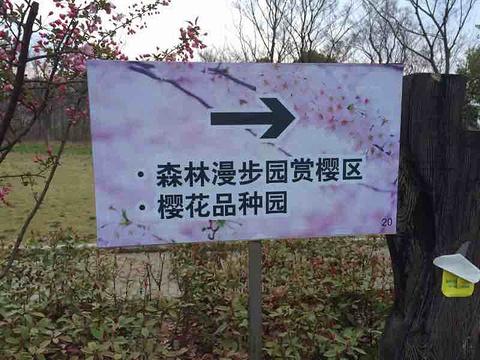 顾村公园旅游景点攻略图