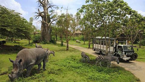 巴厘岛野生动物园的图片