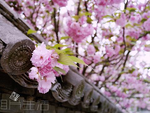 青龙寺旅游景点图片