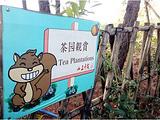 韶关旅游景点攻略图片