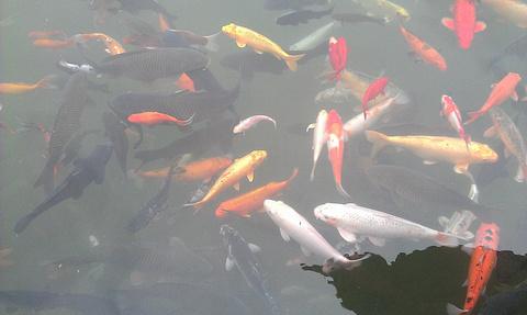 昆明黑龙潭公园旅游景点攻略图