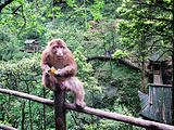 峨眉山生态猴区