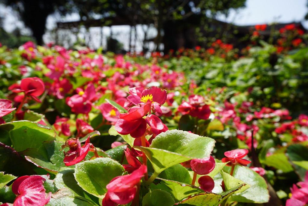 爱上广州—春季公园赏花攻略+广州塔+沙面