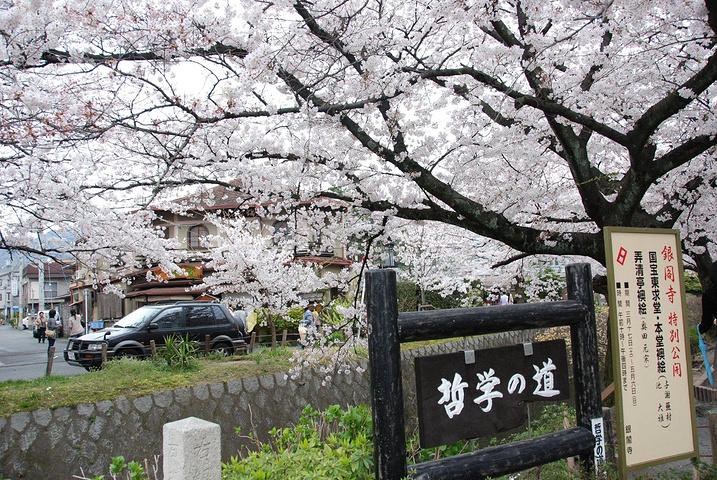 """""""...遇到了很多日本艺妓,她们穿着漂亮的和服,脸用粉打得超级超级白,走在小道上绝对是一道靓丽的风景线_哲学之道""""的评论图片"""
