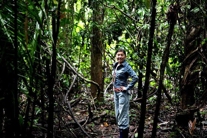 丛林walk继续图片