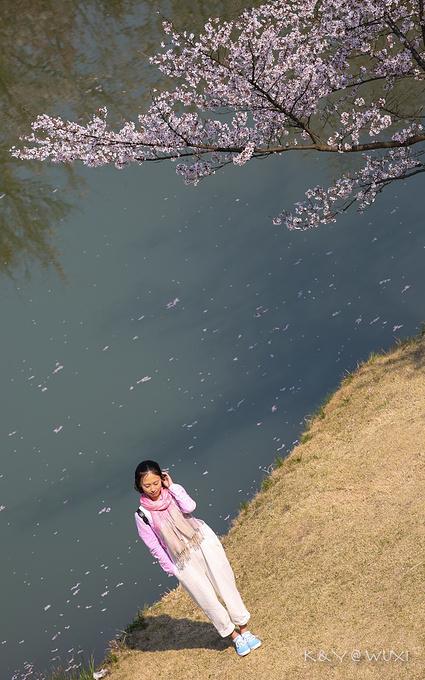 赏樱阁图片