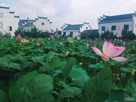 新叶古村旅游景点图片