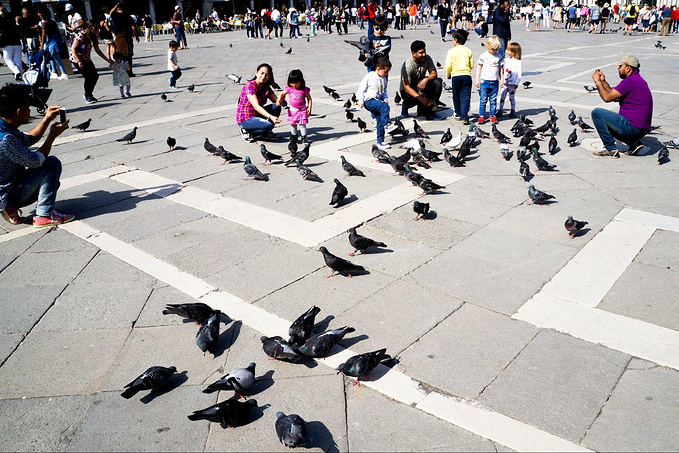 圣马可广场图片