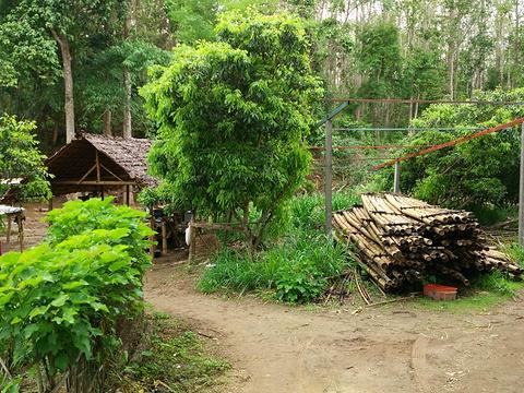 美旺大象营旅游景点图片