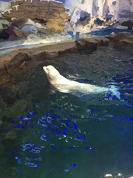 青岛海昌极地海洋公园旅游景点攻略图
