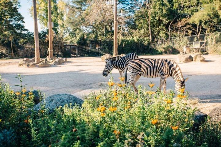 """""""一点都不怕生, 非常可爱_墨尔本动物园""""的评论图片"""