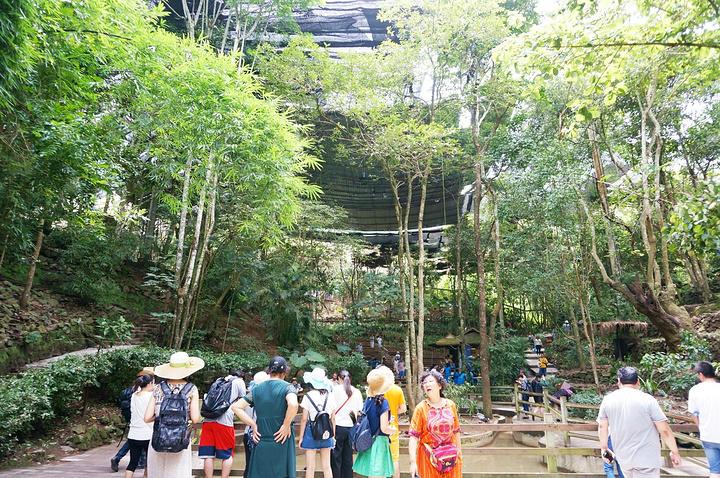 """""""在野象谷搭乘索道穿越森林,领略神奇美丽的热带雨林风光是一种非常舒心的体验。谁能帮我把手臂P细一点_野象谷""""的评论图片"""