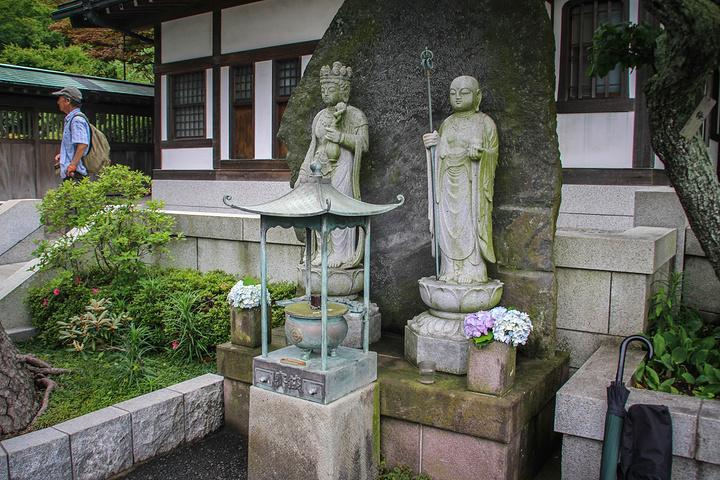"""""""打湿了石阶,让紫阳花在雨的氤氲中更显绚烂。_长谷寺""""的评论图片"""