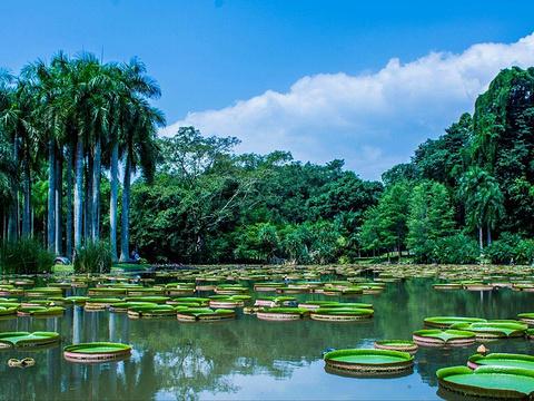 中科院西双版纳热带植物园旅游景点图片