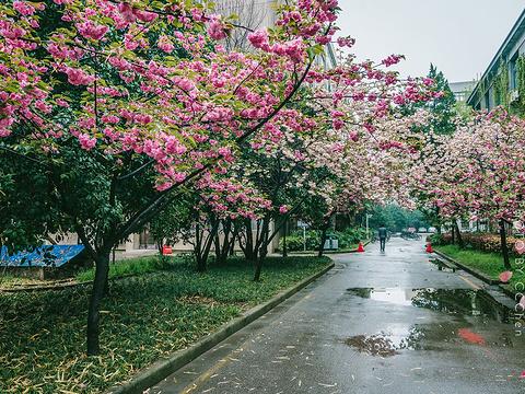 东南大学旅游景点图片