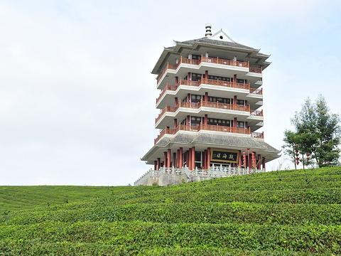 中国茶海景区旅游景点图片