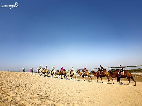 沙湖生态旅游区旅游景点图片