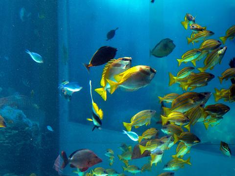 冲绳美丽海水族馆旅游景点图片