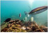 涠洲岛潜水基地