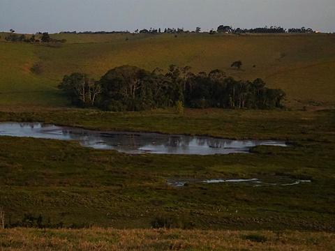 布罗姆菲尔德哈斯提斯沼泽旅游景点图片