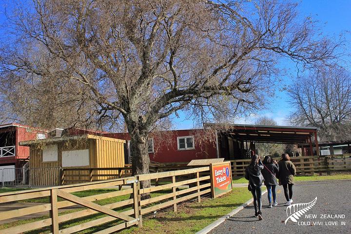 """""""爱哥顿牧场位于新西兰北岛罗吐鲁阿, 罗吐鲁阿是新西兰农产品出口重镇。 _爱歌顿牧场""""的评论图片"""