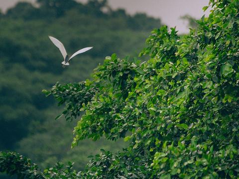 小鸟天堂旅游景点图片