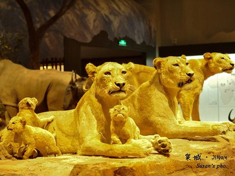 山东博物馆旅游景点图片