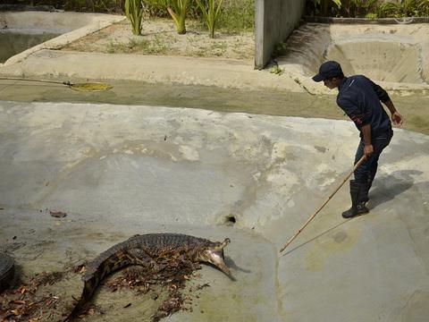 兰卡威鳄鱼公园旅游景点图片