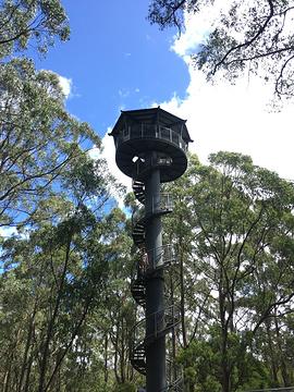 树顶漫步旅游景点攻略图