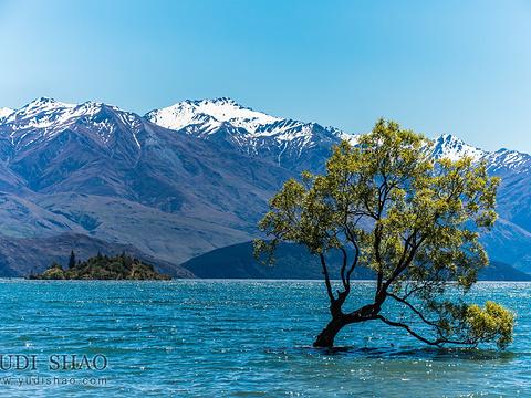 瓦纳卡湖旅游景点图片