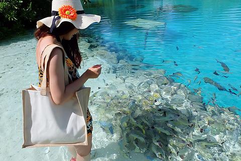 Lagoonarium de Tahiti旅游景点攻略图