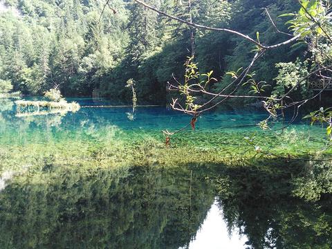 原始森林旅游景点图片