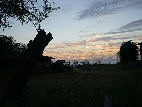 威雷亚海滩旅游景点图片