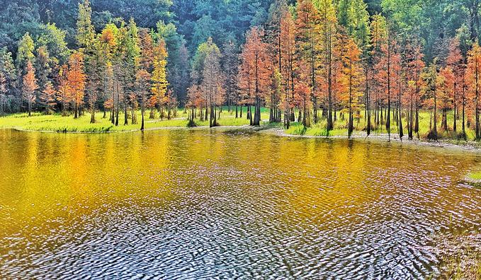 大夫山森林公园图片