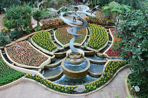 南山植物园的图片
