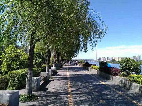 平湖秋月的图片