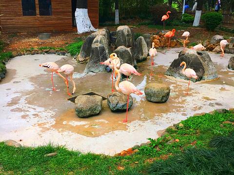 圆通山(圆通山动物园)旅游景点图片