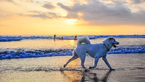 水明漾海滩