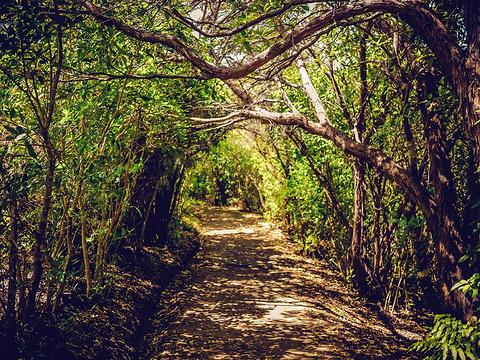 阿贝尔·塔斯曼国家公园旅游景点图片