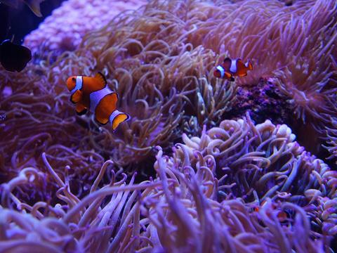 悉尼水族馆旅游景点图片