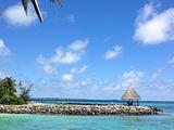 泰姬珊瑚岛旅游景点攻略图片