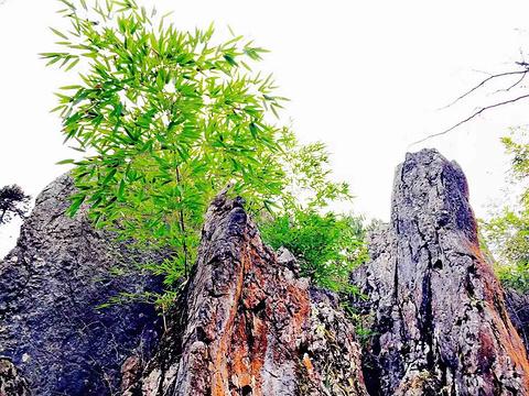 华蓥山天然大盆景旅游景点图片