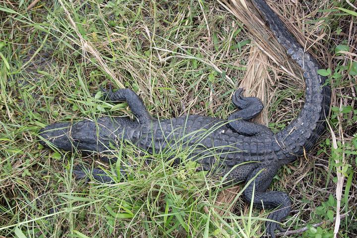 """""""这是我来弗罗里达的最重要的一个原因,湿地里好多野生动物,好开森看到了这么多鸟_大沼泽国家公园""""的评论图片"""